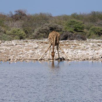 Balade à Okavango