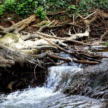 Rivière tranquille