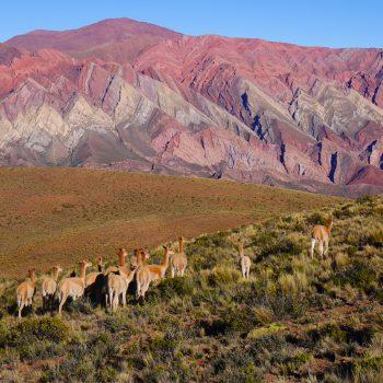 Les Andes magiques