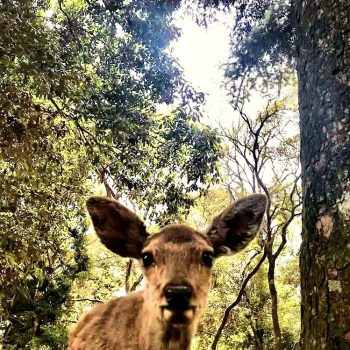 Rencontre avec Bambi