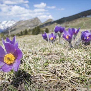 Quand le printemps s'épanouit