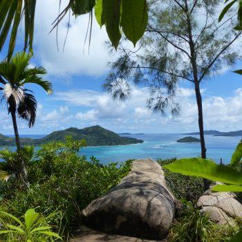 Jungle au dessus d'un océan bleu azur