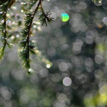 La nature éclairée